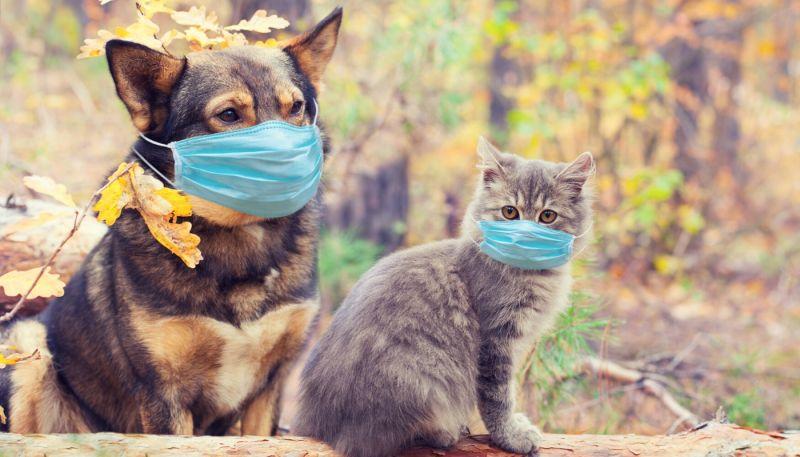 Ciudad en China prohíbe consumo de perros y gatos así como la prohibición nacional de comer animales exóticos y salvajes