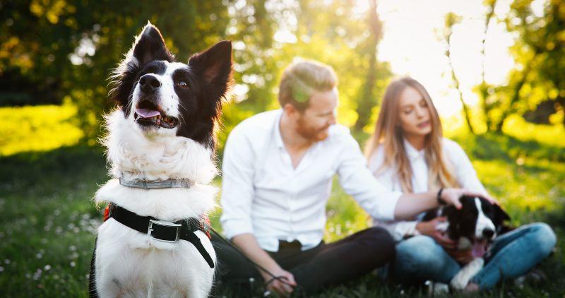 El papel energético de los Perros en nuestra vida, están con nosotros siempre apoyándonos y salvándonos de nosotros mismos