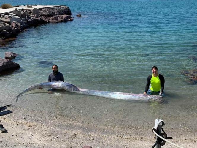 Aparece pez remo en Baja California